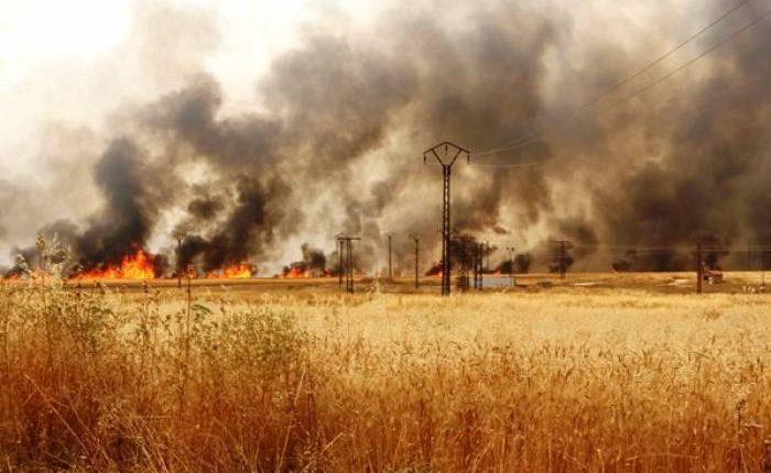 ترامب أمر بعملية حرق هكتارات من حقول القمح في سوريا