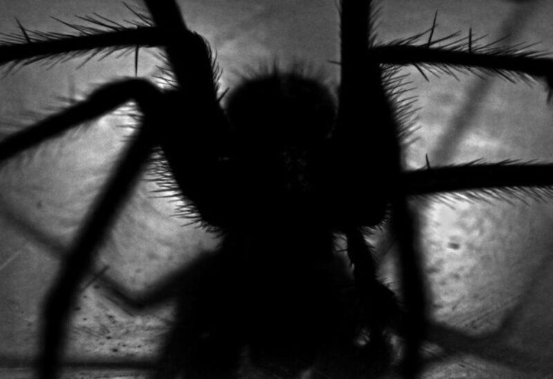 """اكتشاف عنكبوت مميز تظهر عليه """"ابتسامة الجوكر"""""""