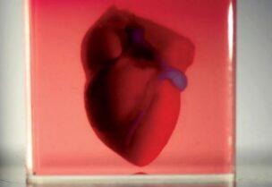 علماء يتمكنوا من تصنيع نموذج مصغر لقلب الإنسان