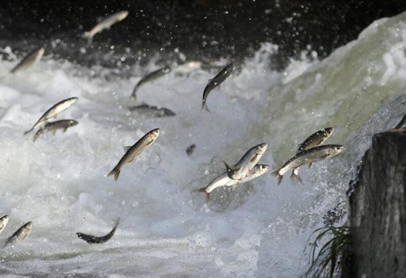 أسماك - تعبيرية