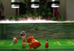 أسماك ذهبية تلعب كرة القدم