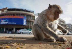 استفتاء تاريخي لمنح القرود حقوق كالبشر في سويسرا