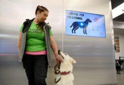 الكلاب وسيلة للكشف عن مصابي كورونا