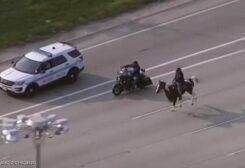 راعي البقر على الطريق السريع