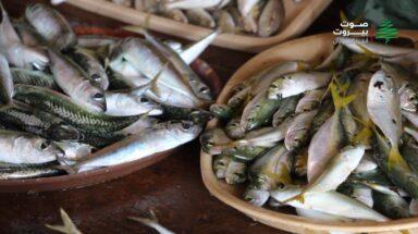 الفقراء حرموا من أكلة السمك