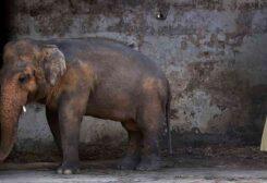 باكستان تنظم حفل وداع لفيل