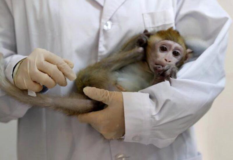 علماء يزرعون جينات بشرية بأمخاخ القرود