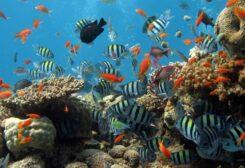 سمكة تتوقف عن التنفس لمدة 4 دقائق