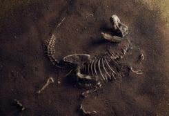 """اكتشاف بقايا """"الأب الروحي'' لديناصور """"تي ريكس"""""""