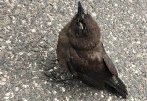 مرض يتسبب بمقتل مئات الطيور