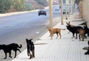 كلاب ضالة- تعبيرية